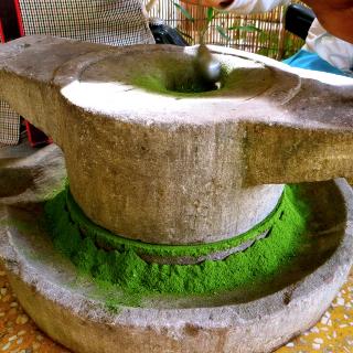 moringa powder fabrication