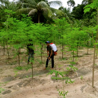 organic spraying 320x320